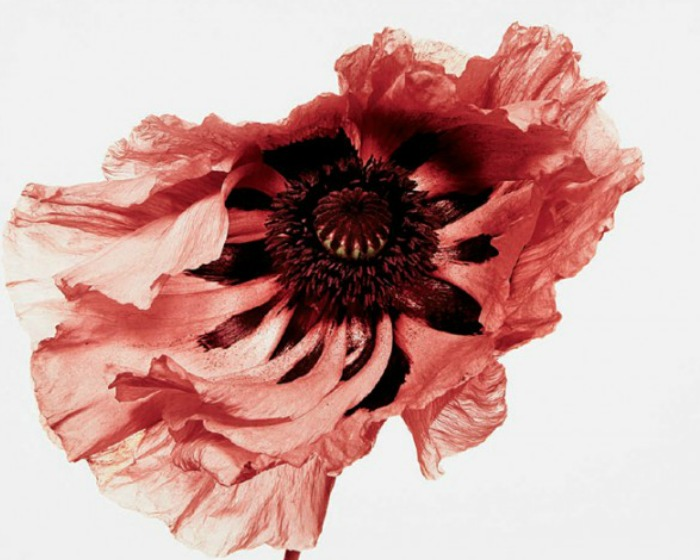 Irving Penn con Resonance